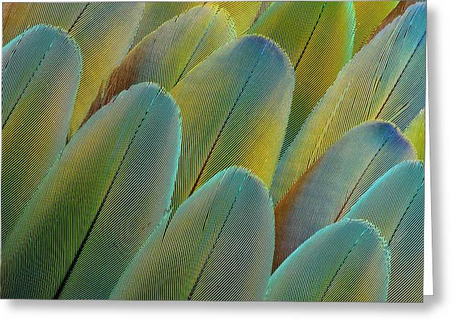 Covert Wing Feathers Of The Camelot Greeting Card by Darrell Gulin