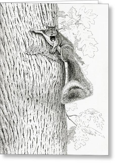 Ink Drawing Greeting Cards - Coveting Nuts Greeting Card by Timothy Livingston