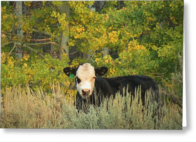 Cow #904 In Aspen Grove Greeting Card by Feva  Fotos