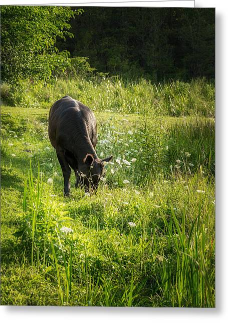 Cows Greeting Cards - Cow Greeting Card by Bill  Wakeley