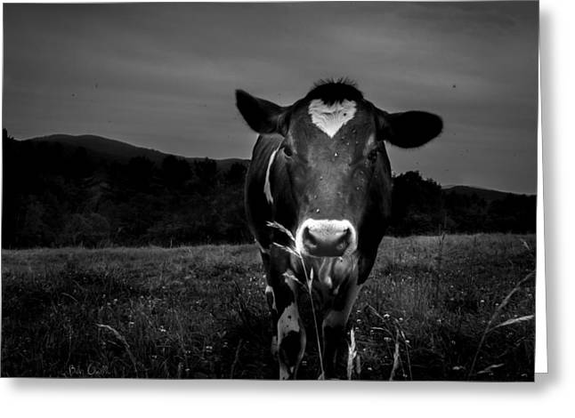 Eat Photographs Greeting Cards - Cow Greeting Card by Bob Orsillo