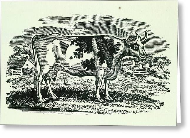 Cow Greeting Card by British Library