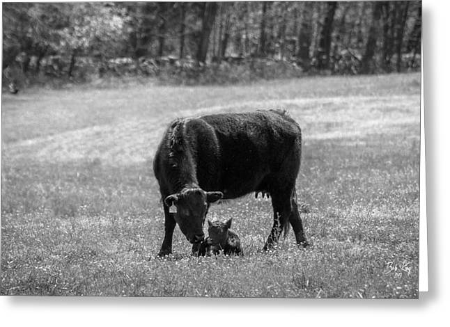 Boone County Greeting Cards - Cow /calf b/w Greeting Card by Bob King