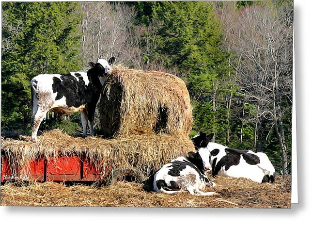 Hay Bales Greeting Cards - Cow Country Buffet Greeting Card by Christina Rollo