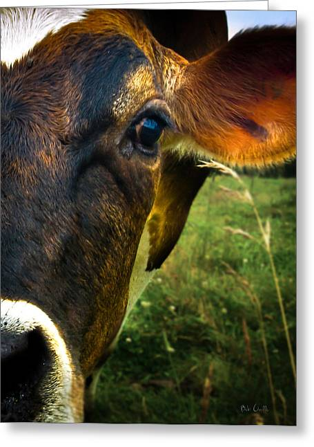 Intense Greeting Cards - Cow eating grass Greeting Card by Bob Orsillo