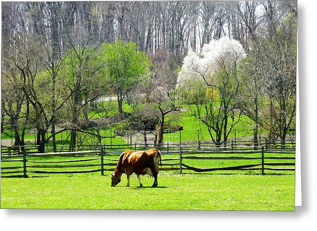Cow Grazing In Pasture In Spring Greeting Card by Susan Savad