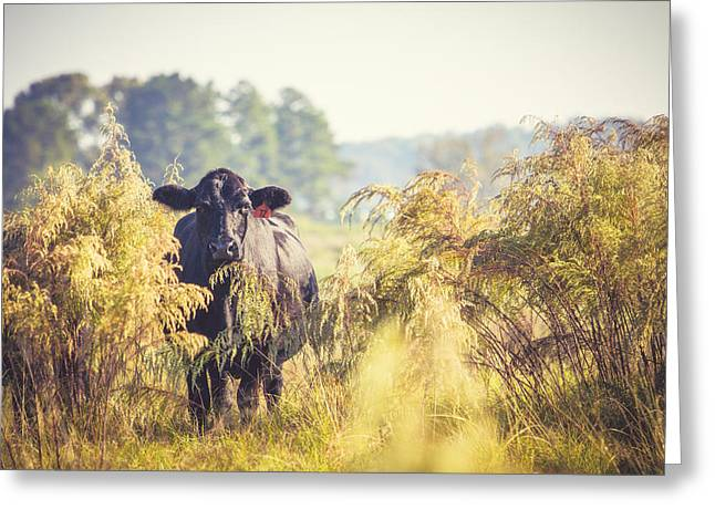 Angus Steer Photographs Greeting Cards - Cow Hiding in the Weeds Greeting Card by Karen Broemmelsick