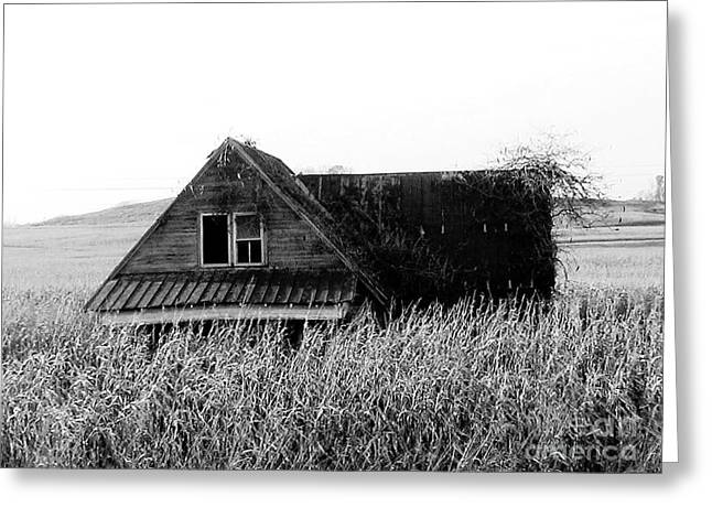 Black-and-white Pyrography Greeting Cards - Cow House Black And White Greeting Card by Monica Withers