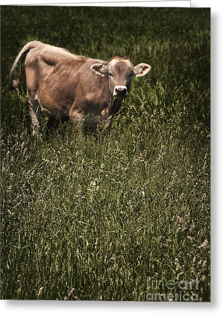 One Cow Greeting Cards - Cow In A Pasture Greeting Card by Margie Hurwich