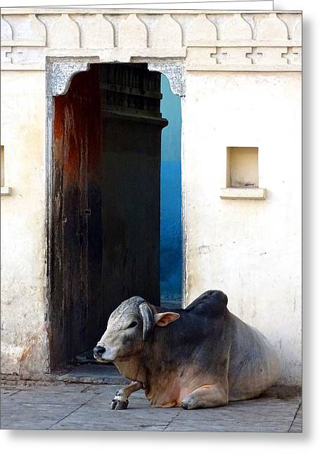 Sacred Cow Greeting Cards - Cow in Temple Udaipur Rajasthan India Greeting Card by Sue Jacobi