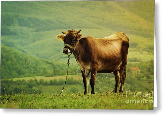 Rural Landscapes Pyrography Greeting Cards - Cow in the Field Greeting Card by Jelena Jovanovic