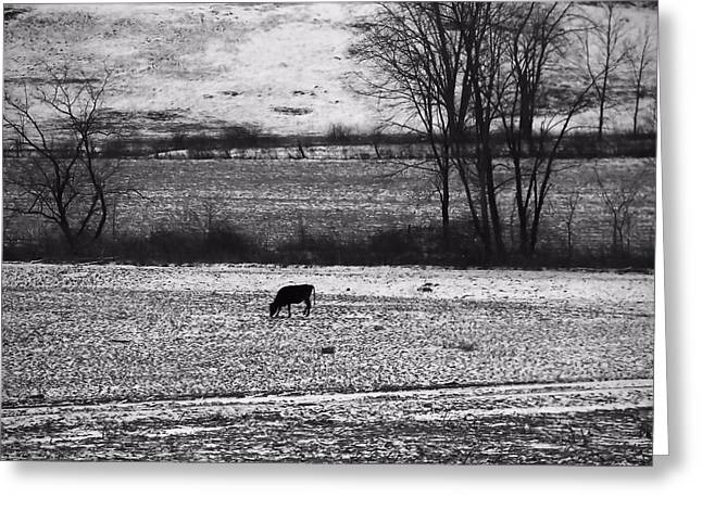 Snowstorm Greeting Cards - Cow In The Fields Of Ohio Greeting Card by Dan Sproul