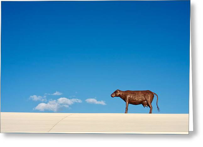Tin Roof Greeting Cards - Cow On A Hot Tin Roof Greeting Card by Mary Lee Dereske