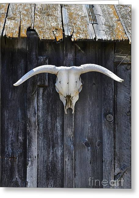 Cattle-shed Greeting Cards - Cow Skull on a Barn Greeting Card by Jill Battaglia
