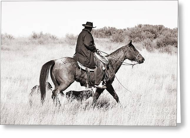 Western Greeting Cards - Cowboy and Dogs Greeting Card by Cindy Singleton