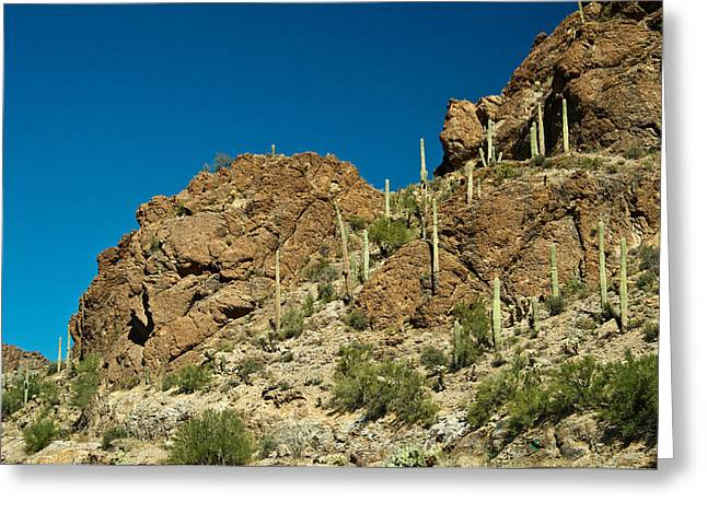 Caryophyllales Greeting Cards - Cowboy Country Arizona 1 Greeting Card by Douglas Barnett