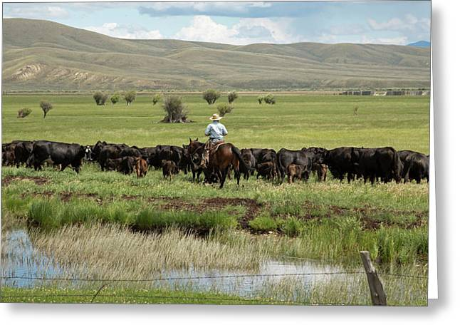 Cowboy Herding On A Cattle Ranch Greeting Card by Jim West