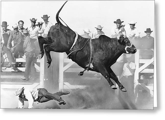 Brahma Bull Greeting Cards - Cowboy Riding A Bull Greeting Card by Underwood Archives