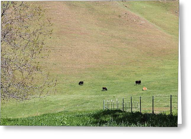 Cows Along The Rolling Hills Landscape of The Black Diamond Mines in Antioch California 5D22319 Greeting Card by Wingsdomain Art and Photography