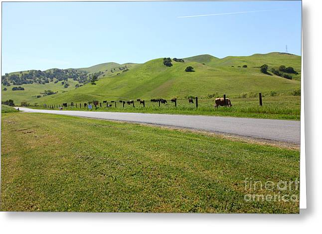 Cows Along The Rolling Hills Landscape of The Black Diamond Mines in Antioch California 5D22326 Greeting Card by Wingsdomain Art and Photography