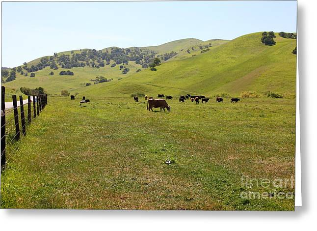 Cows Along The Rolling Hills Landscape of The Black Diamond Mines in Antioch California 5D22327 Greeting Card by Wingsdomain Art and Photography