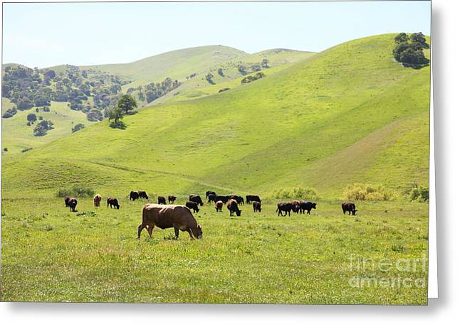 Cows Along The Rolling Hills Landscape of The Black Diamond Mines in Antioch California 5D22328 Greeting Card by Wingsdomain Art and Photography
