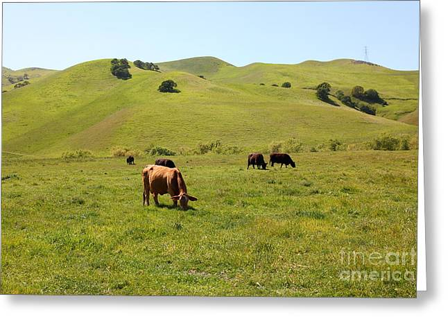 Cows Along The Rolling Hills Landscape of The Black Diamond Mines in Antioch California 5D22350 Greeting Card by Wingsdomain Art and Photography