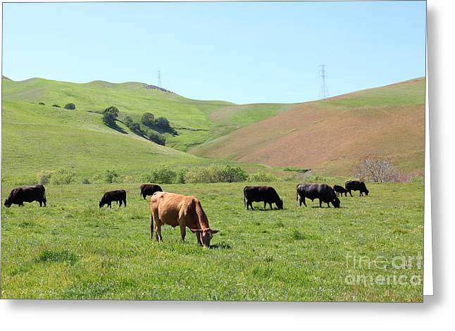 Cows Along The Rolling Hills Landscape of The Black Diamond Mines in Antioch California 5D22355 Greeting Card by Wingsdomain Art and Photography