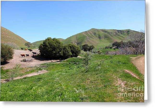 Cows Along The Rolling Landscapes of The Black Diamond Mines in Antioch California 5D22291 Greeting Card by Wingsdomain Art and Photography