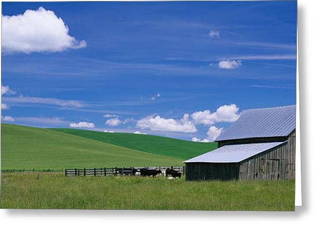 Three Cows Greeting Cards - Cows And A Barn In A Wheat Field Greeting Card by Panoramic Images