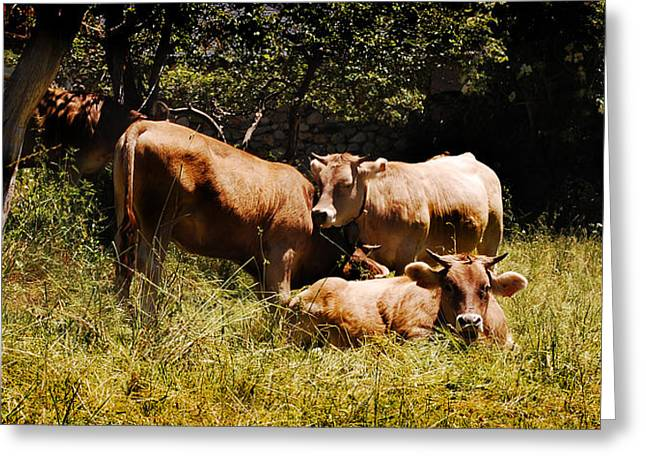 Moo Moo Greeting Cards - Cows and moos Greeting Card by Gina Dsgn