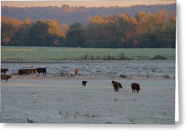 Cold Morning Sun Greeting Cards - Cows At Sunrise Greeting Card by Dan Sproul