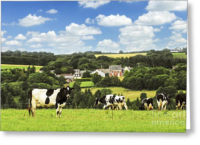 Green Hills Greeting Cards - Cows in a pasture in Brittany Greeting Card by Elena Elisseeva