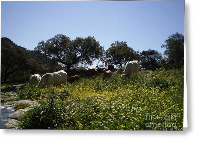 Extremadura Greeting Cards - Cows in Extremadura Greeting Card by Chani Demuijlder