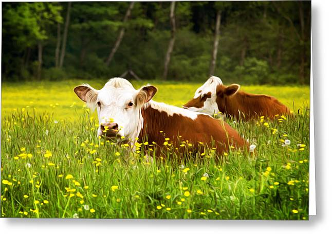 Cow Images Greeting Cards - Cows in Meadow Greeting Card by Christina Rollo