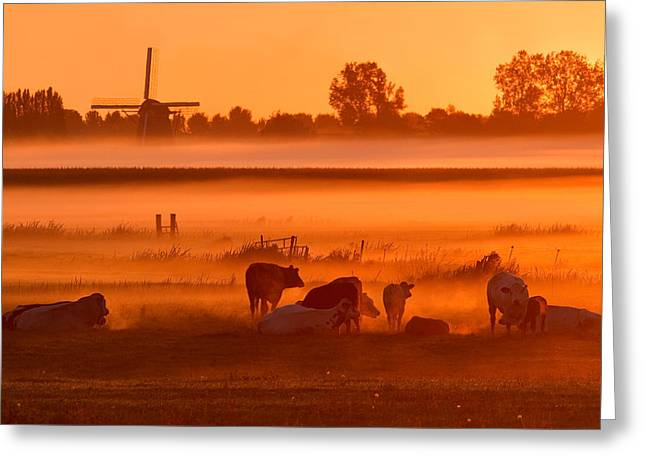 Cows In The Mist Greeting Card by Roeselien Raimond