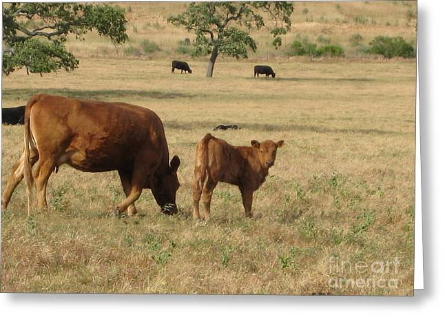 Pastureland Greeting Cards - Cows in the Pasture Greeting Card by Maureen J Haldeman