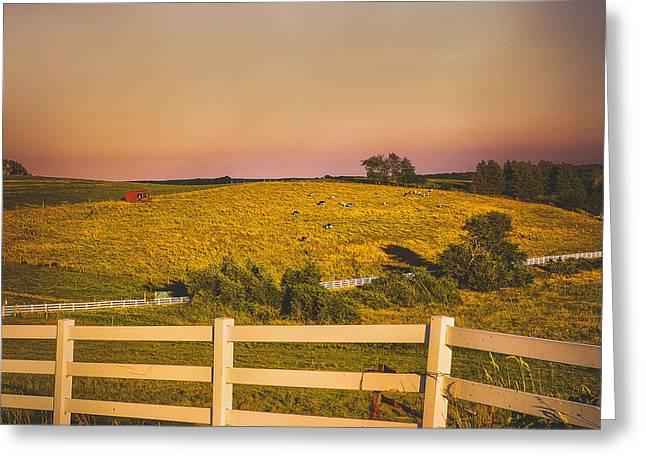 Uconn Greeting Cards - Cows on Horsebarn Hill - UConn Greeting Card by Steve Pfaffle