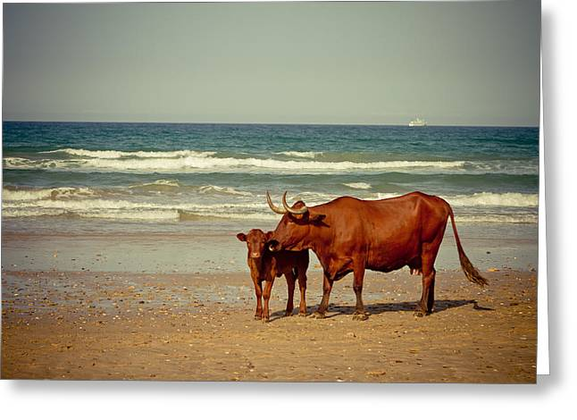Sea Animals Pyrography Greeting Cards - Cows On Sea Coast Greeting Card by Raimond Klavins