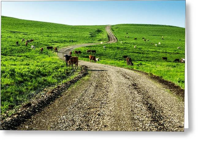 Gravel Road Greeting Cards - Cows on the Road Greeting Card by Eric Benjamin