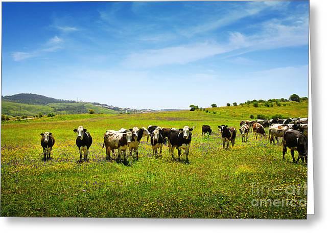 Pasture Scenes Greeting Cards - Cows Pasturing Greeting Card by Carlos Caetano
