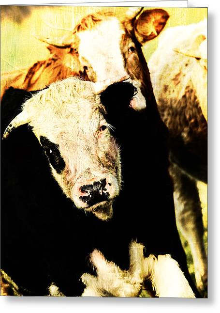 Live Mixed Media Greeting Cards - Cows posing  Greeting Card by Toppart Sweden