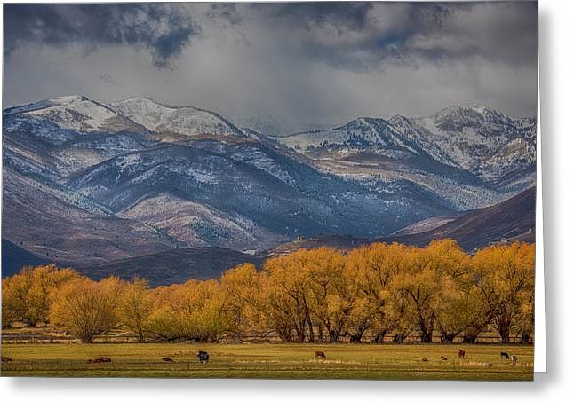 Majestic View Greeting Cards - Cows Trees Mountains and Clouds Greeting Card by Paul Freidlund