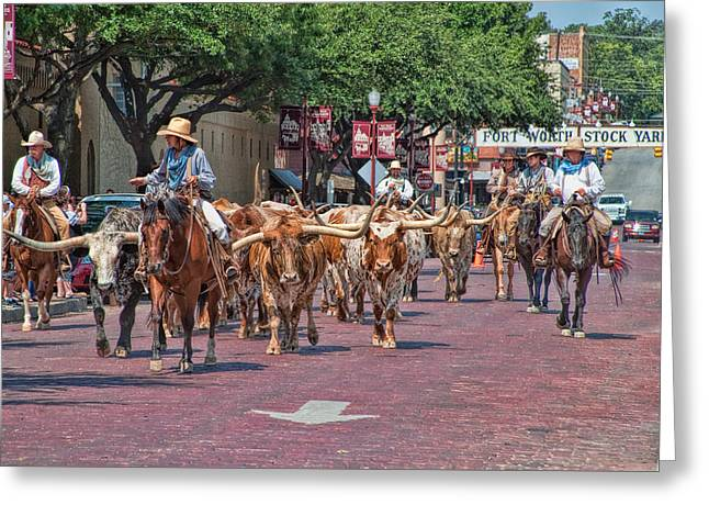 Steer Greeting Cards - Cowtown Cattle Drive Greeting Card by David and Carol Kelly