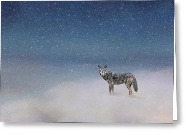 Brush Wolf Greeting Cards - Coyote In Winter Greeting Card by Jai Johnson