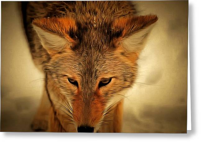 Levi Greeting Cards - Coyote Greeting Card by Levi Saunders