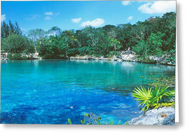 Tree Lines Greeting Cards - Cozumel, Mexico Greeting Card by Panoramic Images