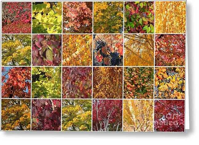 Grape Leaf Greeting Cards - Cozy Autumn Leaves Collage Greeting Card by Carol Groenen