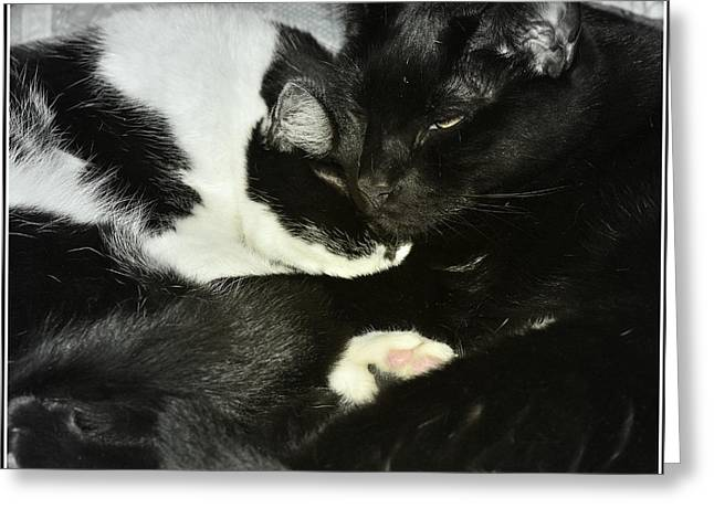 Litter Mates Photographs Greeting Cards - Cozy Greeting Card by Kathy Barney