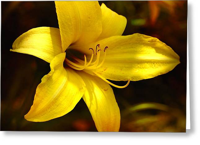 Cozy Yellow Daylily Greeting Card by Carol Groenen